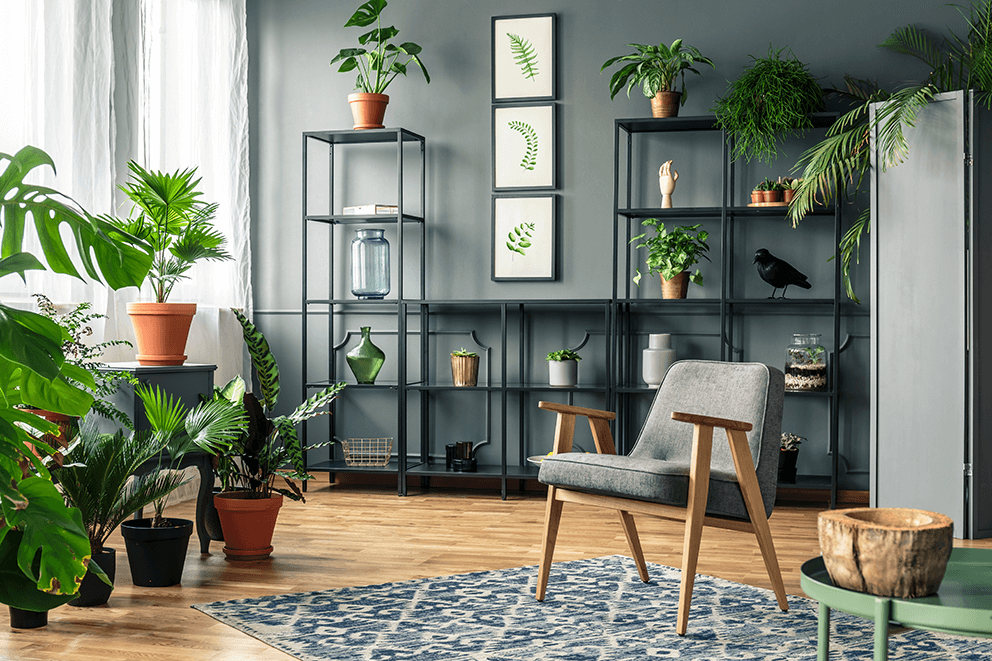 indoor plant room
